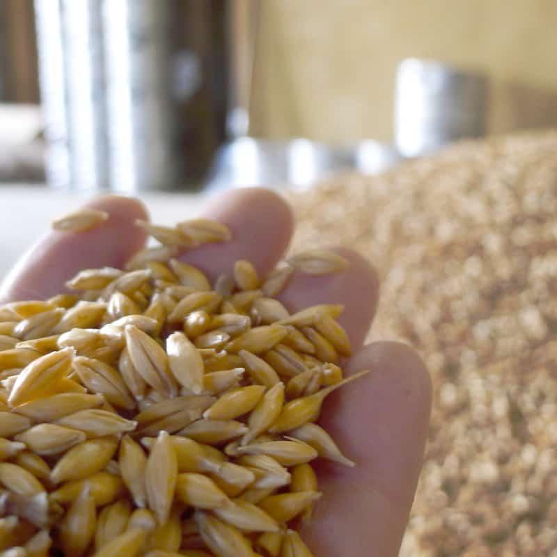 Malterie : malt biologique et paysan