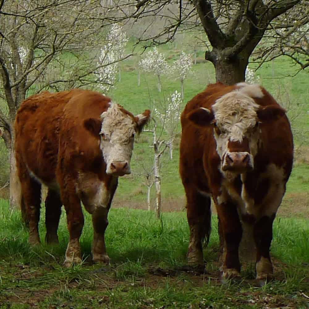 Ferme en Agriculture Biologique