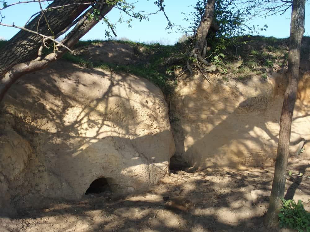 Terriers dans le sol sableux de La Basse Lande.
